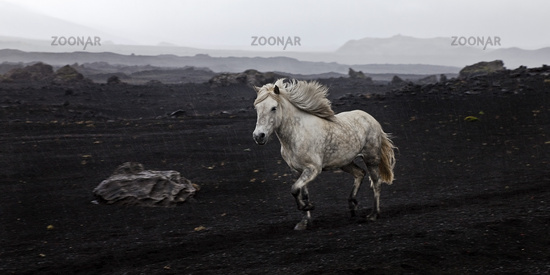 IS_Pferd_11.tif