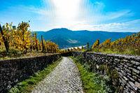 Path through a Vine yard