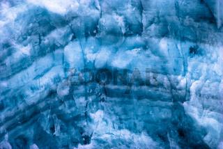 Dreizehen-Möwe am Samarinbreen, Spitzbergen