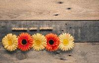 Beautiful gerbera flowers with the German words, spring is loading