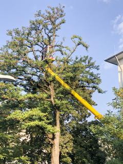 Arborist Climber