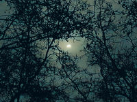 Moonscape Surrounded By Tree Branches