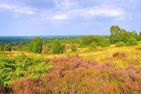 Lüneburger Heide im Herbst, Aussicht vom Wilseder Berg - landscape Lueneburg Heath in autumn near Wilsede, view from the hill
