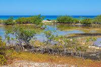 Mangrove plants at coast of island Bonaire