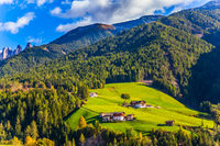Farm cows graze on the mountains