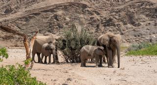 Elefanten im Etosha National Park Namibia Südafrika
