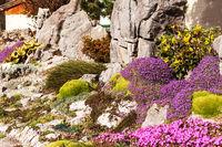Schöner künstlich angelegter Steingarten