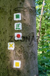 markierte Wanderwege an einem Baum im Thüringer Wald