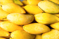 Pile of yellow mango fruits as food background