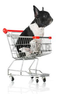 Welpe sitzt in Einkaufswagen