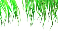 Fresh spring green grass isolated on white background. 3d illustration closeup with copyspace