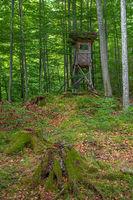 Hochsitz im Wald auf dem Kesselberg in Bayern