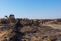 Caravan of Camels and Afar people, Ethiopia