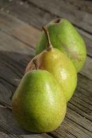 Pyrus communis Alexander Lucas, Birne, Pear