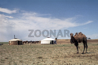Jurten einer mongolischen Aratenfamilie in der Wüste Gobi, Foto von 1977