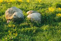 Huge stones in the green grass are illuminated by the sun. Spring day in the Park