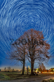 Circle of stars over a lonely tree the north star polaris centred.