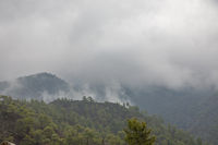 Nebel im Troodos-Gebirge, Zypern