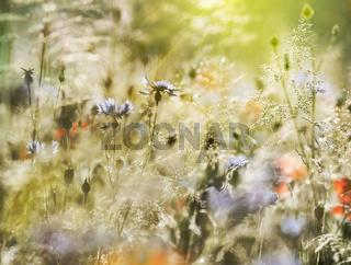wildblumenwiese natur pastell sonne