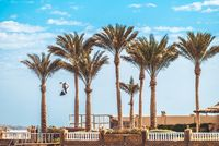Developing high in the sky a kite of kiteboarder flying between palm trees in the foreground