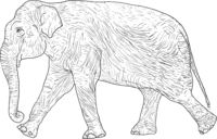 Sketch large African elephant on a white background