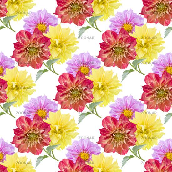 seamless pattern of dahlia flowers on white