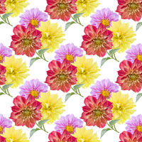 seamless pattern of dahlia flowers on white