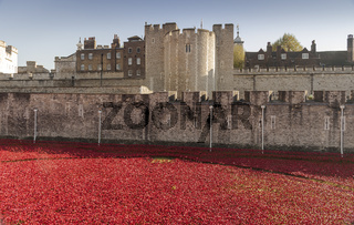 The beatiful display of poppies at the Tower of London. A stunning meorial to those who perished in World War 1.