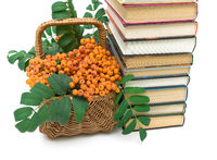 basket with rowan berries and books closeup. white background.