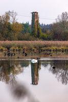 Beobachtungsturm in einem Naturschutzgebiet mit Spiegelung in einem See