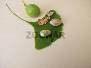 Geknackte Ginkgonüsse ohne Samenschale, Ginkgo biloba