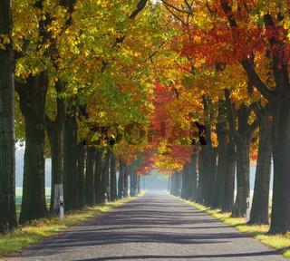 Allee im Herbst - avenue in fall 29
