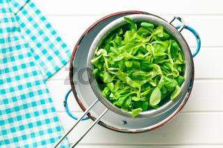 corn salad, lamb's lettuce in colander