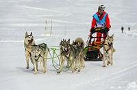 Schlittenhundeteam Sibirische Huskies, Praz de Lys Sommand, Haute-Savoie, Savoyen, Frankreich