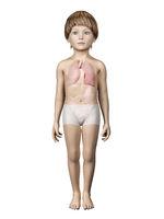 child anatomy