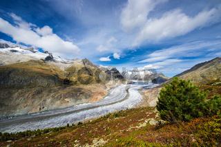 Der große Aletschgletscher in der Schweiz
