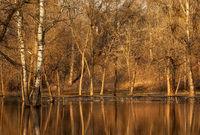 Am Ufer des Frühjahrwald.