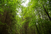 Beautiful Green Forest With Many Trees. Sunny Spring Or Summer Time