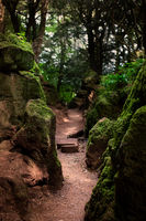 A basic dirt path leads deep in to the dark Puzzlewood forest, Coleford, England.