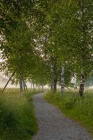 Birkenallee am Kochelsee in Bayern