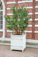 Garden pot with green coniferous tree