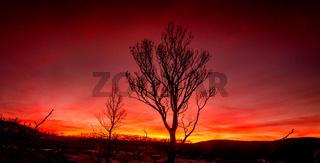 Red sunset on a burnt landscape