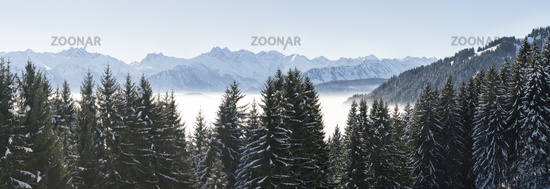 Forested mountain slope and mountain range panorama with snow in low lying valley fog with silhouettes of evergreen conifers shrouded in mist. Snowy winter landscape in Alps, Allgau.
