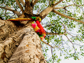 The colored ribbons at the holy bodhi tree