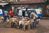 Ethiopian people on animal market, Ethiopia Africa