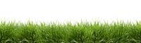 Banner - Saftig grünes Gras freigestellt