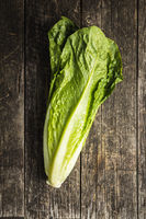 Fresh green Romaine Lettuce. Leaves of Lactuca sativa.