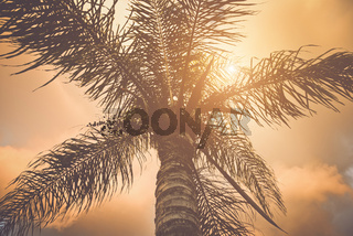 Palm Trees with Instagram Style Retro Filter