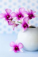 Lila Orchideen in kleiner Vase