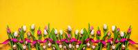 Banner Of Yellow And Pink Tulip Spring Flowers, Yellow Background, Easter Eggs